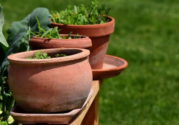 Heilkräuter zum Eigenbedarf selber pflanzen